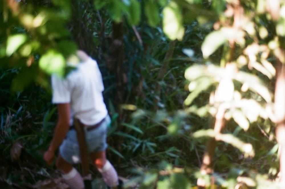vale do ribeira, communities e agroforests